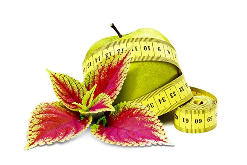 Why Take Forskolin Weight Loss Supplements?